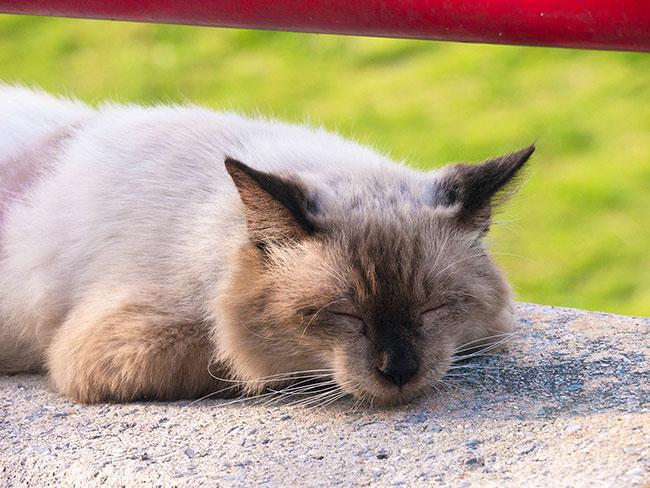 症状別・寝起きの不調の原因を考える