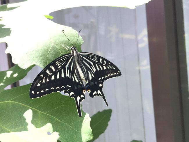 夏休みの自由研究のお手伝い。昆虫観察とか枕作成とか