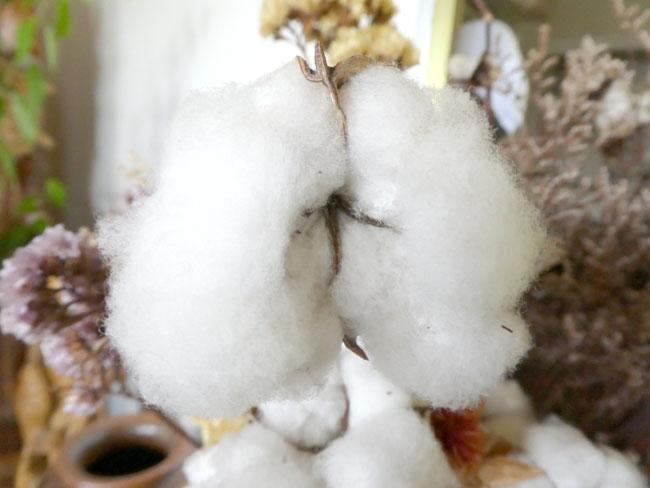 羽毛布団の生地。綿とポリエステルの差