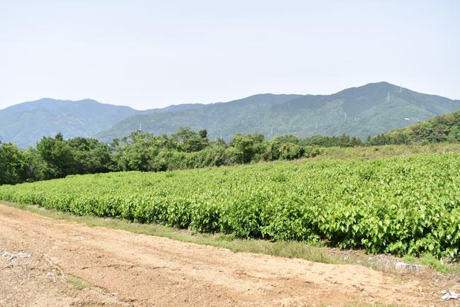 大洲真綿の生産地見学その1・純国産真綿布団の軌跡をたどる