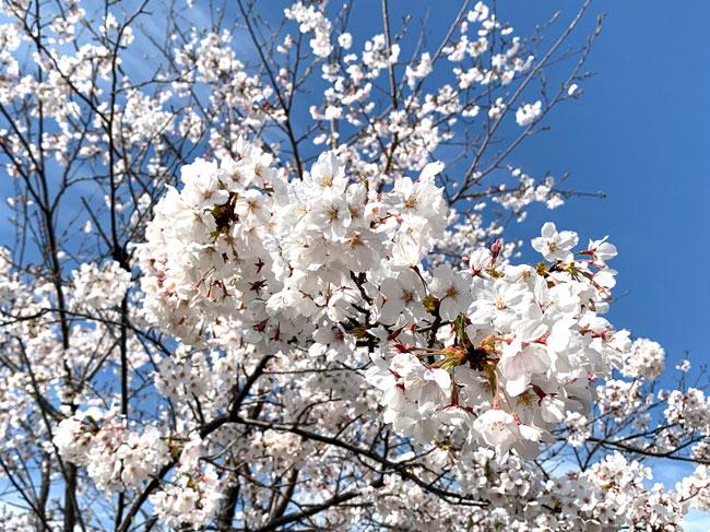 """気温と生活環境の変化が大きい""""春の睡眠""""を良くするには"""